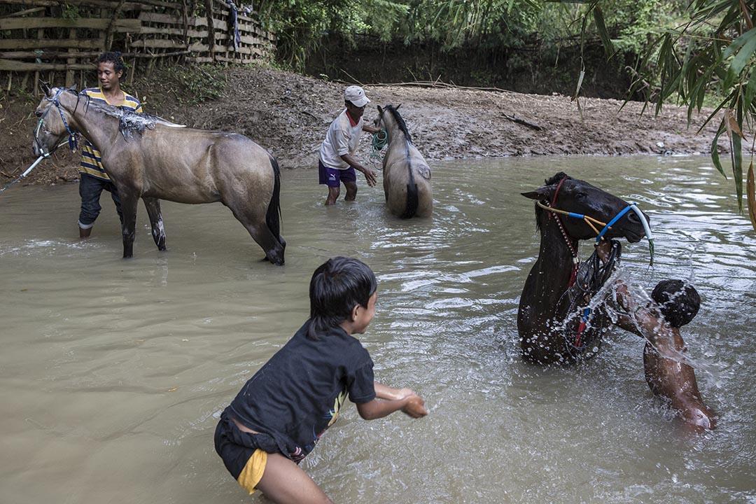 小騎師們在河中與馬兒嬉戲。攝:Putu Sayoga