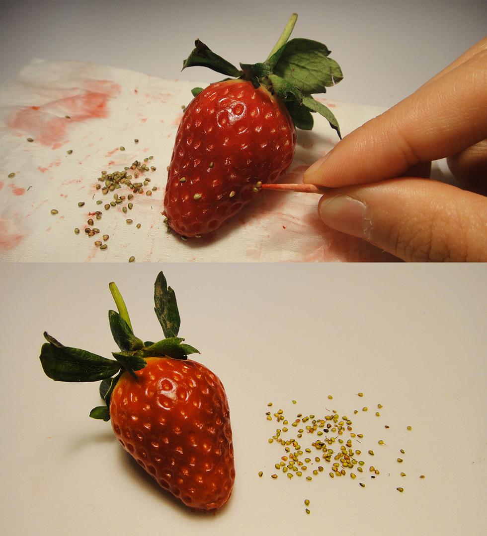麥影彤的畢業作品《絕育》(2013),整個作品是一點點把草莓的種子挑出來。圖片由麥影彤提供