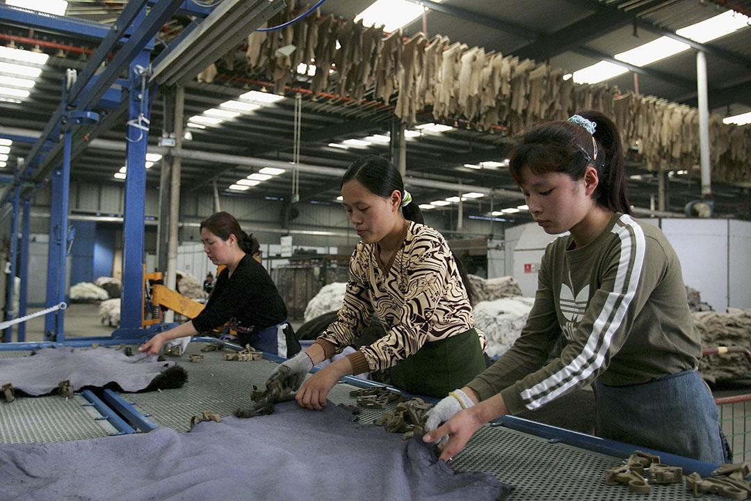 女工在中國河南省焦作市的皮草廠內工作。攝:Guang Niu/GETTY