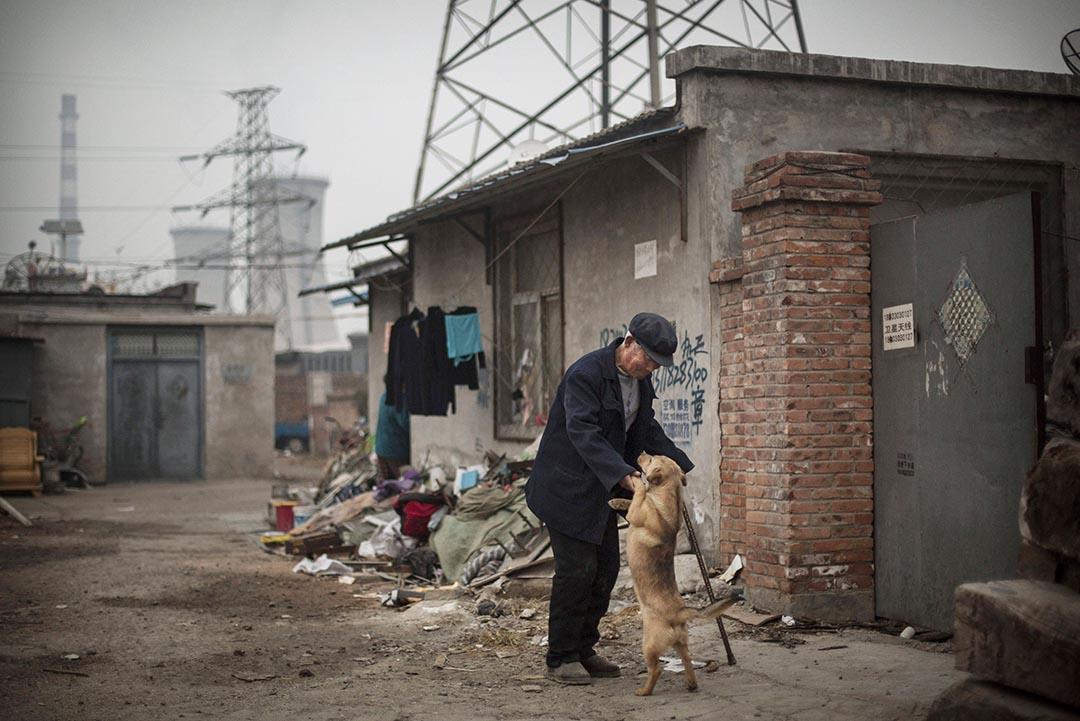 美國生物學家通過基因研究發現,所有現存的狗都來自中亞。攝 : Kevin Frayer/GETTY