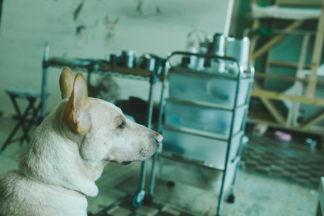 藝術家禤善勤工作室內的小狗。攝 : 王嘉豪/端傳媒