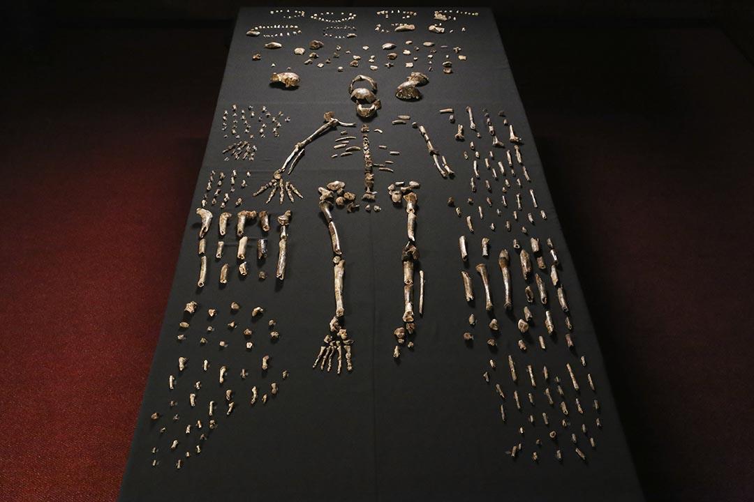南非發現新品種人類化石,其身體結構介乎現代人類與原始人之間,相信是現代人類的絕種親戚。科學家將之命名為「納萊迪人」(Homo naledi),取當地語言「星辰」之意。攝:John Hawks/ University of Wisconsin-Madison/ AFP