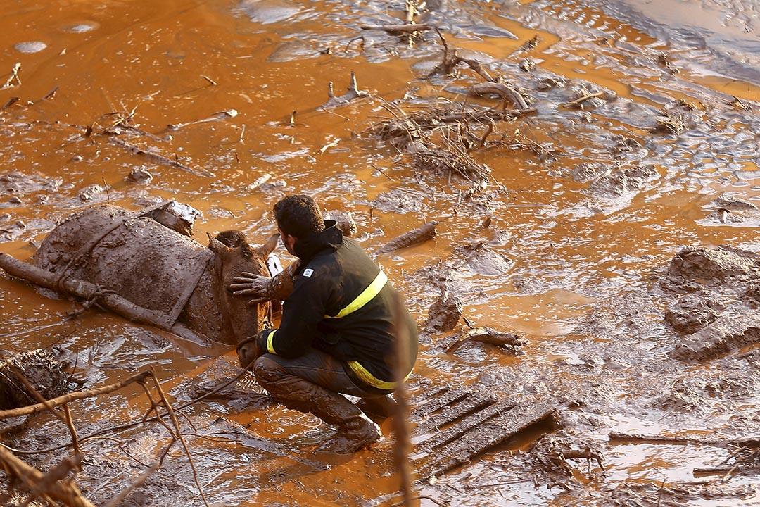 巴西堤壩破裂傾瀉出大量礦渣污泥和廢水,已導致多人死亡。圖為一名救援人員正安撫跌入泥中的馬匹。攝:Ricardo Moraes/REUTERS
