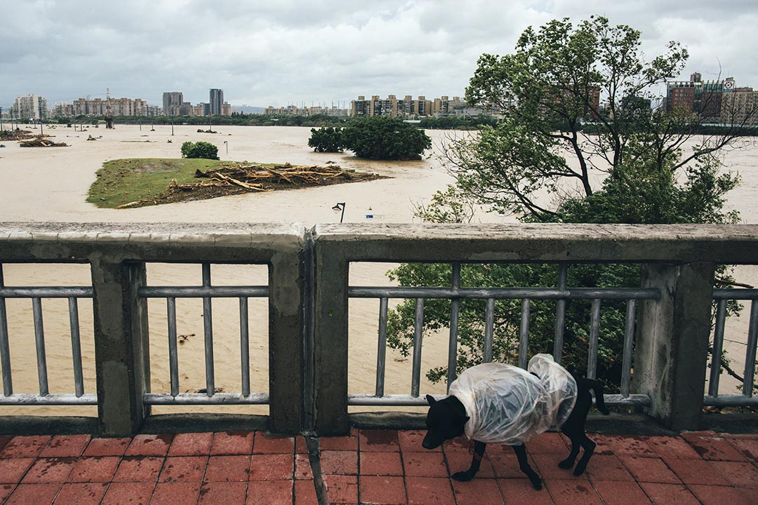 中正橋的新店溪水位高漲,岸邊的綠光河岸公園及中正河濱公園都被水淹蓋。攝 :  葉家豪/端傳媒