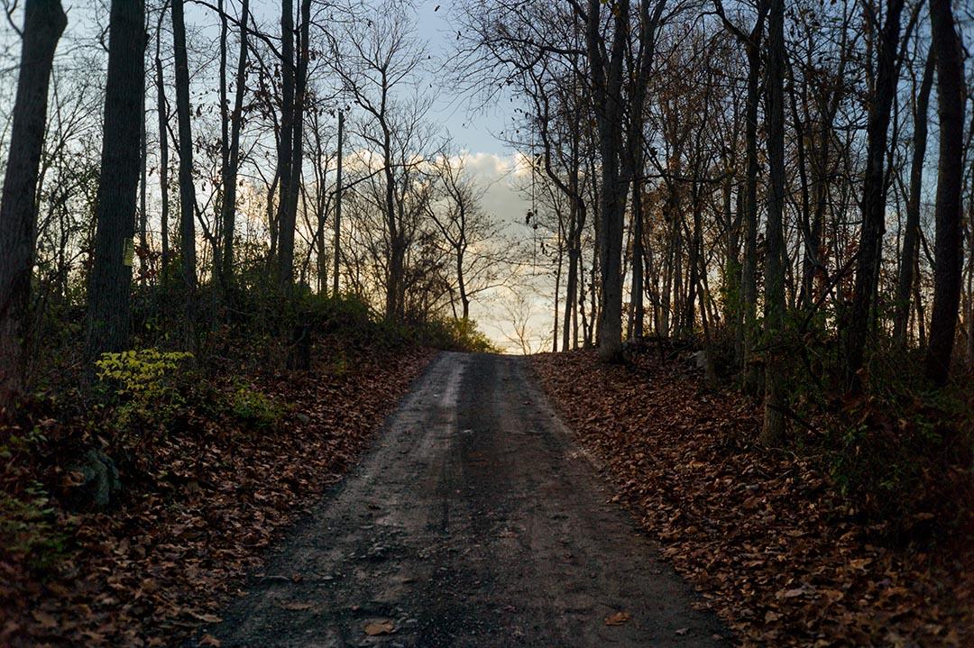 通向Holly家的穿過小樹林的沒有鋪砌柏油的小路。攝 : Hai Zhang/端傳媒
