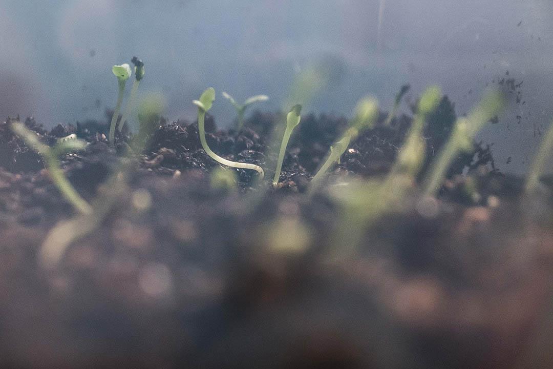 自殺者親屬於園藝治療活動期間親手種的植物,活動鼓勵自殺者親屬在種植的過程中體驗生命的活力和規律。攝:Billy H.C. Kwok/端傳媒