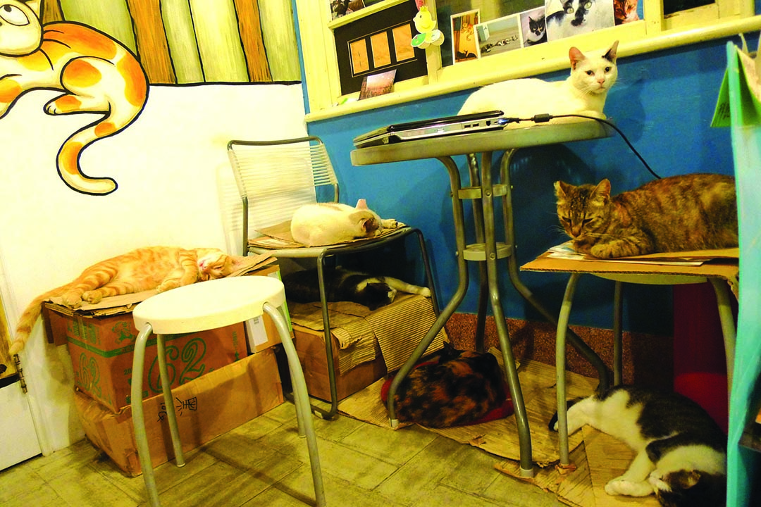 有河book書店裏的七貓辦公室。攝:隱匿