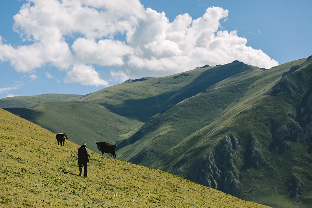牧民在山上草原放牧。攝 : 王嘉豪/端傳媒