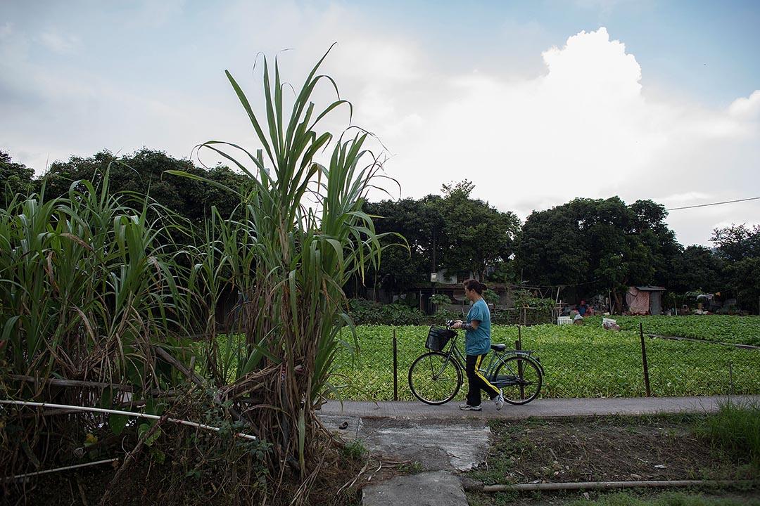 香港鄉議局籌謀在鄉村村界內的綠化地帶上廣建「丁屋」。攝 : Lam Yik Fei/GETTY