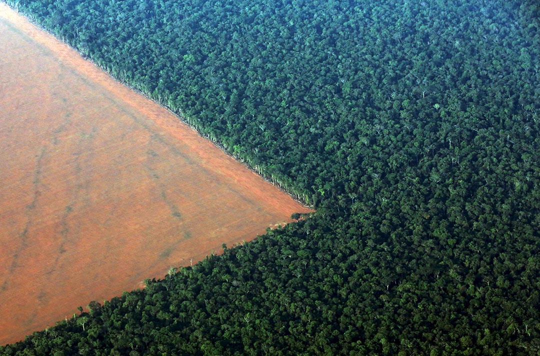 2015年10月4日 巴西 部分亞馬遜雨林地段準備砍伐以種植大豆。攝 : Paulo Whitaker/ Reuters
