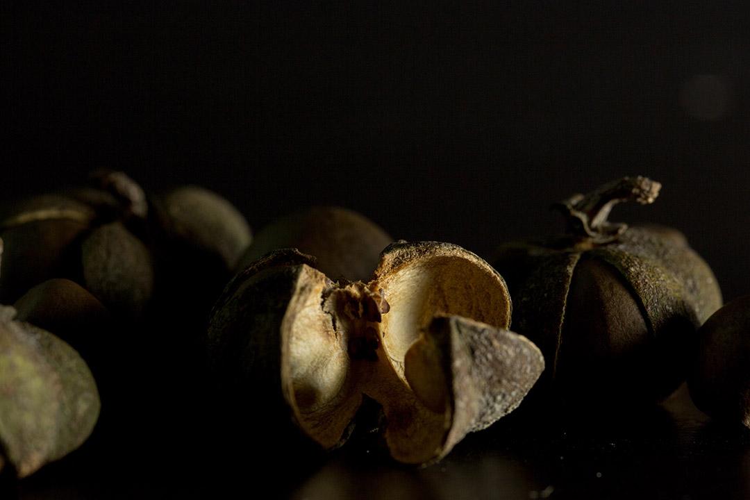 油茶籽。攝:張國耀/端傳媒