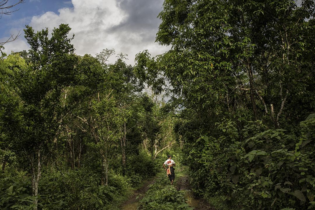 U Win Bo,被指同時經營合法和非法木廠,在他木廠後的樹林散步。攝: Minzayar/端傳媒