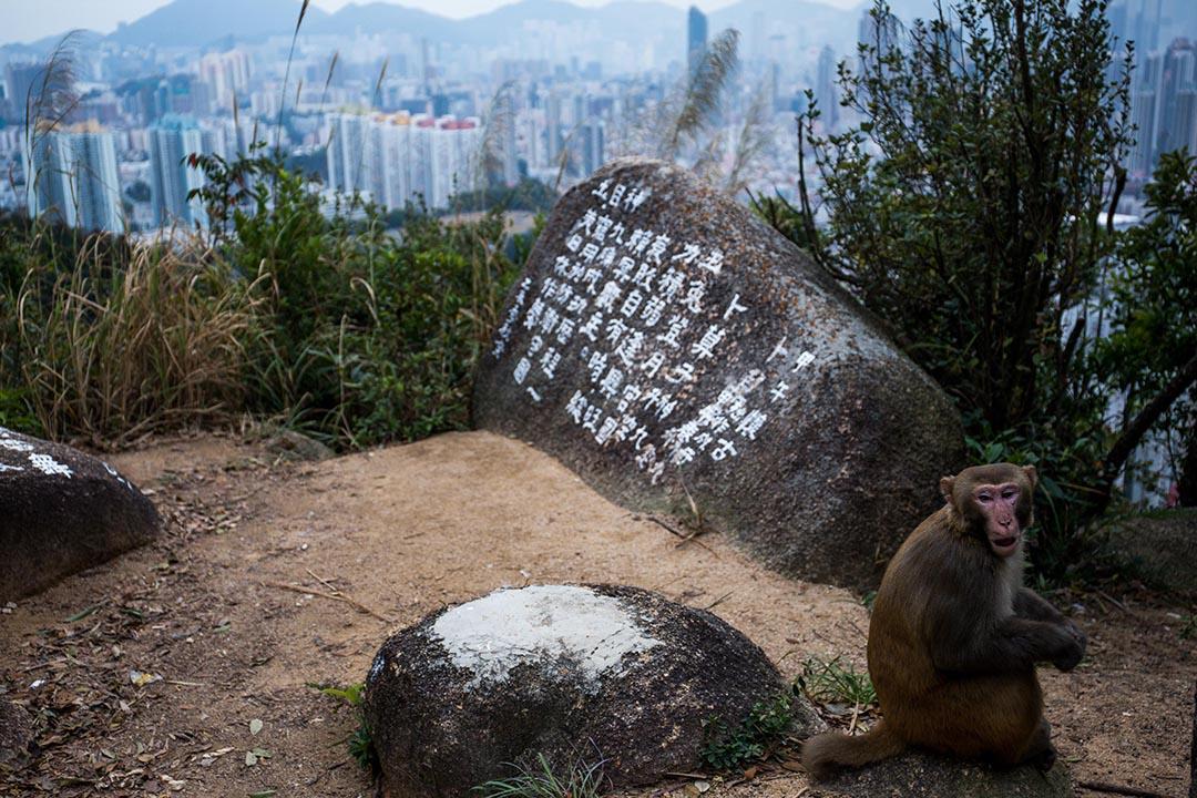 社會普遍關注城市發展對原有社區生態,對自然環境的破壞,而政府往往辯說發展對香港整體經濟的貢獻,這些討論背後的政治意涵,其實是香港城市規劃的方向辯論。攝:盧翊銘/端傳媒