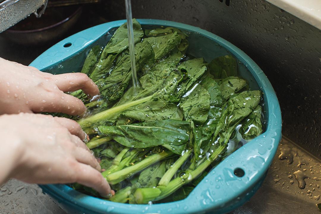 測試包括香港最常吃的蔬菜包括菜心攝:王嘉豪/端傳媒