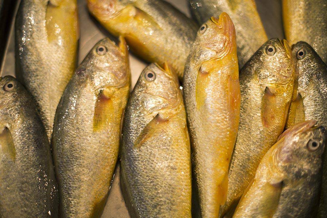 早市内的黄花鱼。圖片由綠色和平中國提供