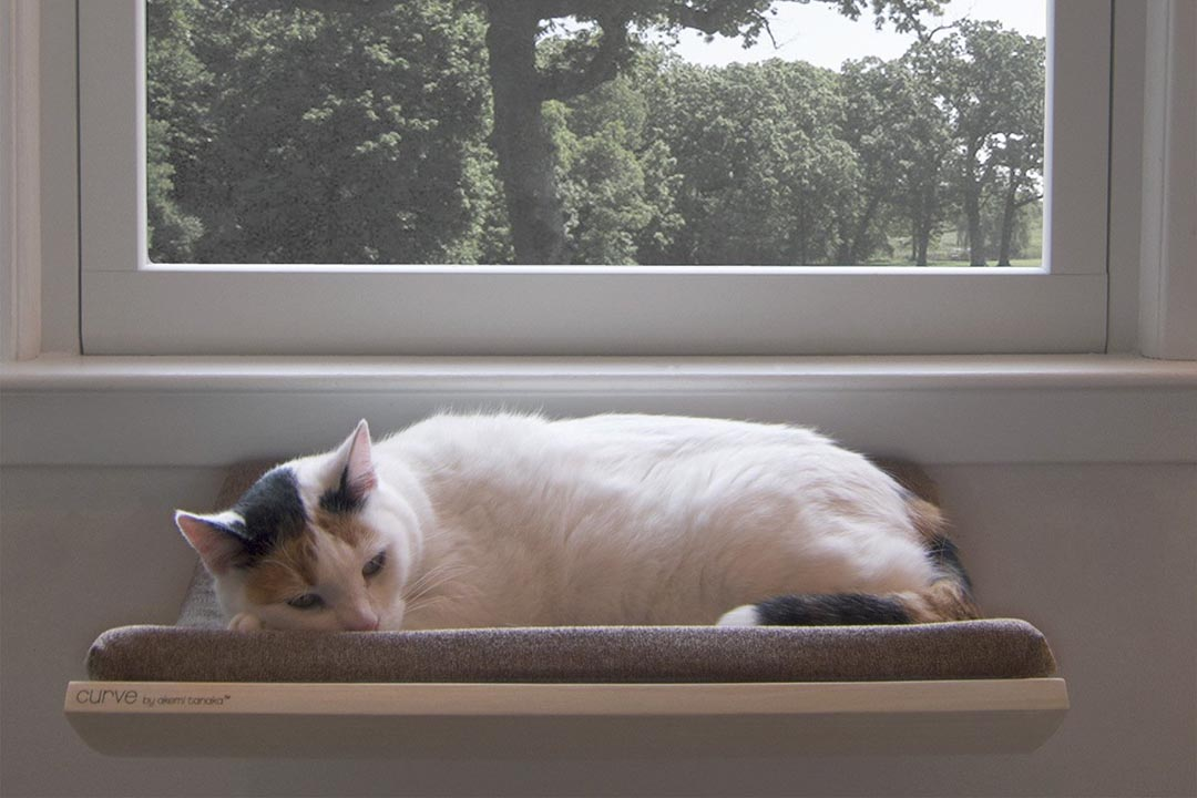 可設於窗前的 Curve ,特別適合成為貓的瞭望台。圖片由作者提供