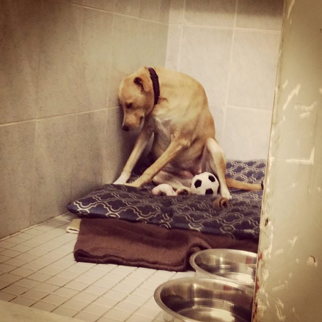 "牠就是小狗Lana,""the saddest dog in the world""(世上最哀傷的狗)。圖:Rescue Dogs Match Facebook圖片"