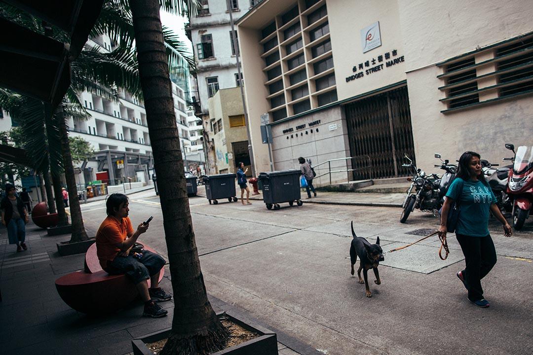 種滿椰樹的街道,你能想像這裏是香港的一隅嗎?攝:盧翊銘/端傳媒
