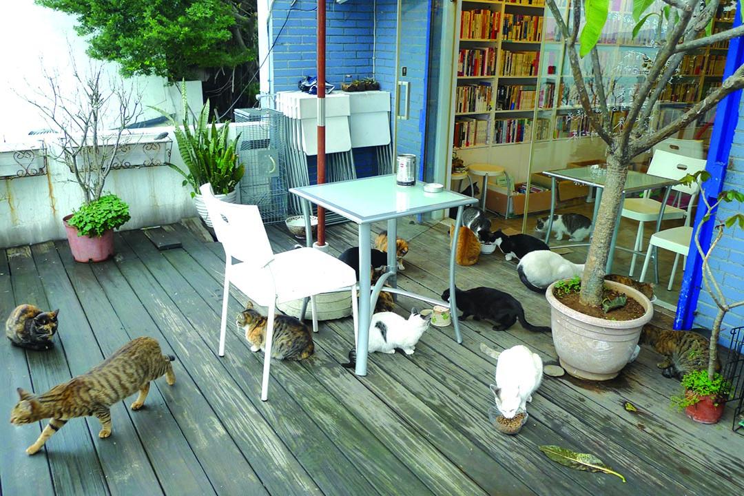 有河book書店裏的貓。攝:隱匿