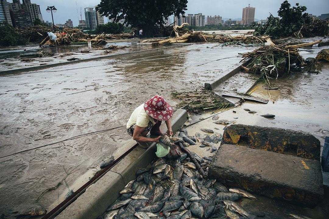 中正橋下的綠光河岸公園一片頹垣敗瓦,河中不少魚被沖上岸邊,有市民到場撿魚。 攝 : 葉家豪/端傳媒