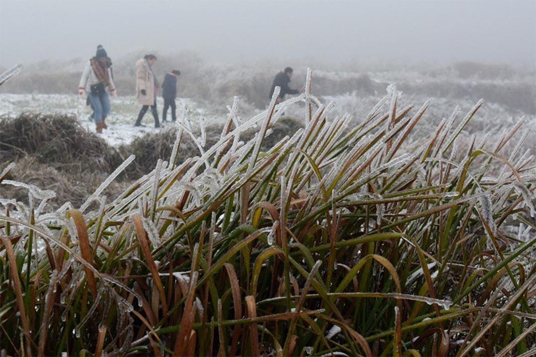 廣東省韶關植物結霜。 攝:STR / AFP