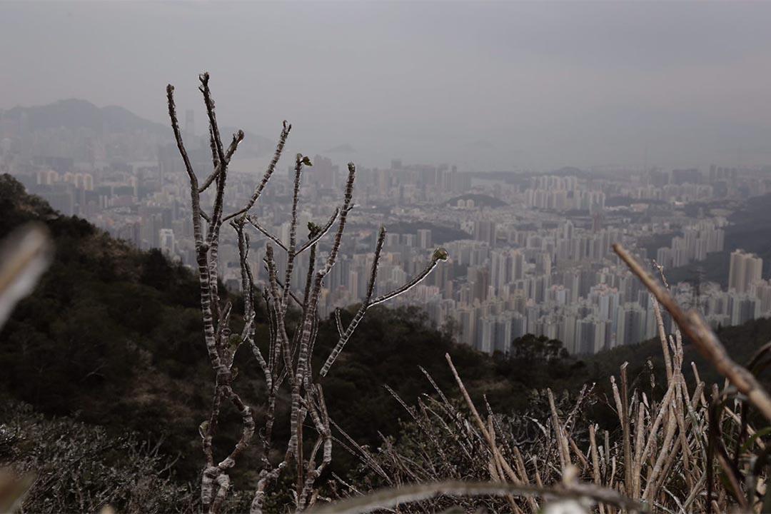 飛鵝山。攝:Anthony Kwan/端傳媒
