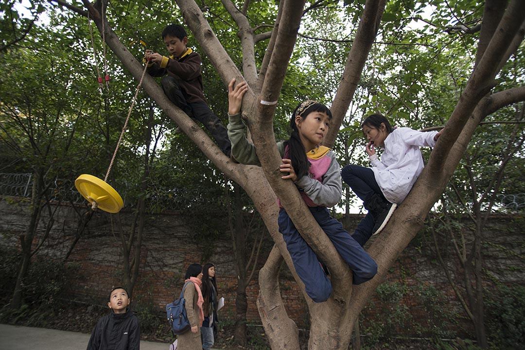 同學們在樹上玩耍。攝:Wu Yue/端傳媒