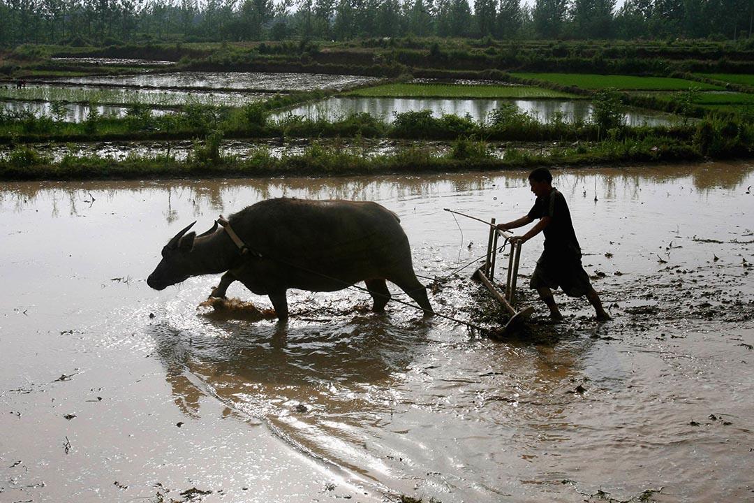 中國於近日公布了農村深化改革方案。攝:ChinaFotoPress/Getty