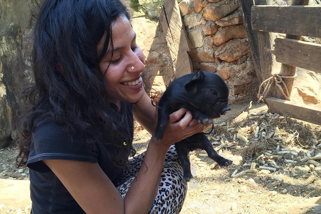 友人抱着小豬說,她最愛的那隻小黑豬前兩天死了,因為牠媽媽不肯喂奶,牠的兄弟姐妹將過繼給另一隻黑豬媽媽。梁美提供
