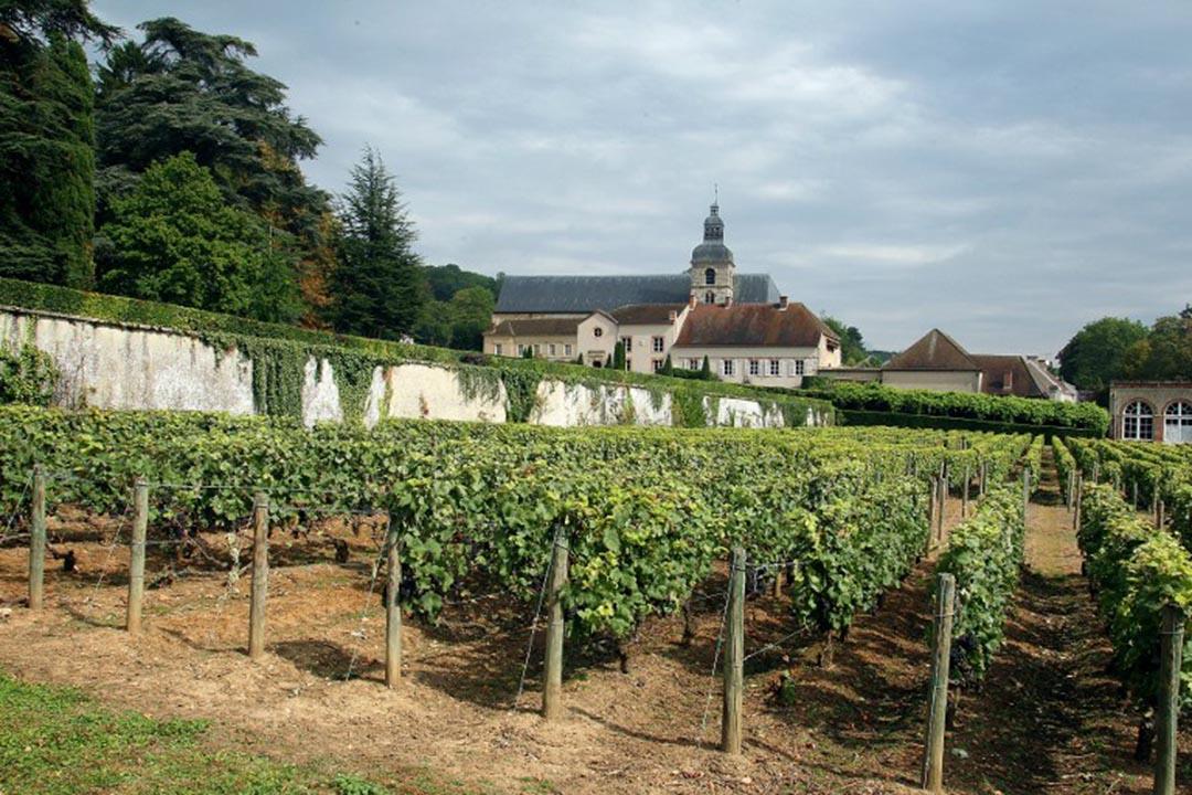 圖為法國香檳區的葡萄園。攝:FRANCOIS NASCIMBENI / AFP