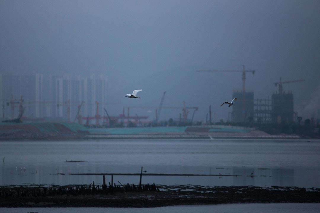 深圳和香港一河之隔,共享著四片海域,從西至東分別是:前海灣、深圳灣、大鵬灣和大亞灣。攝:盧翊銘/端傳媒