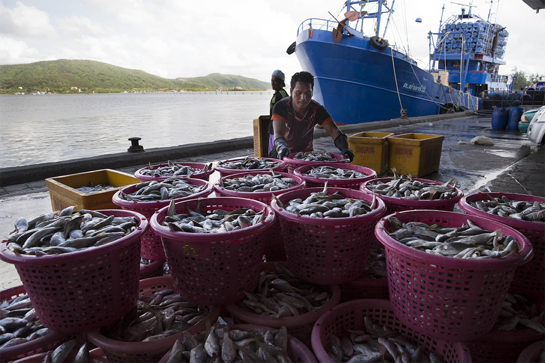 圖為泰國一艘漁船在碼頭卸下漁獲。攝:Paula Bronstein/GETTY