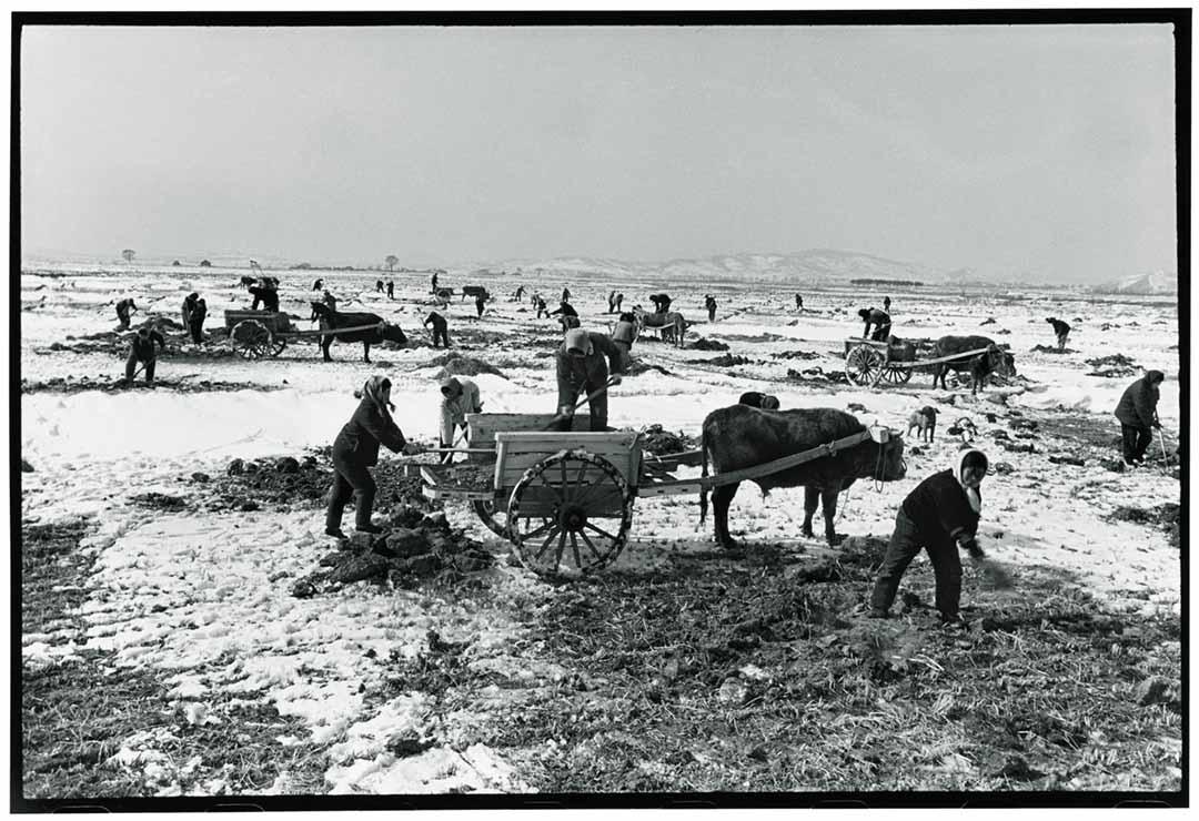 1974年12月19日,黑龍江雙城區,農民及以女性為主的知青「上山下鄉」,參與耕作。