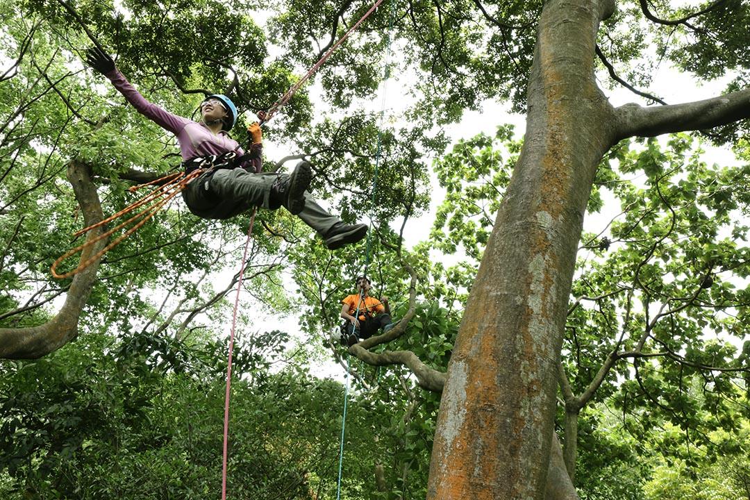 經驗越多,越能運用各種技巧享受在樹上飛越的自在。