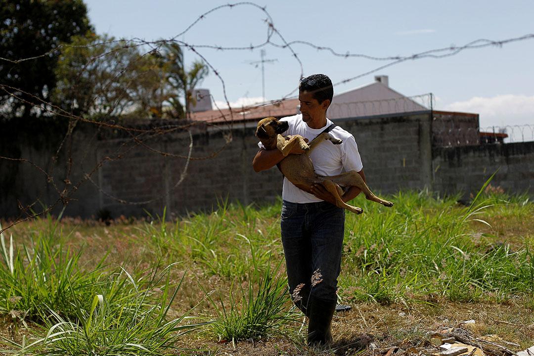 2016年4月22日,Alvaro Saumet在哥斯達黎加聖荷西拯救一隻流浪狗。攝:Juan Carlos Ulate/REUTERS