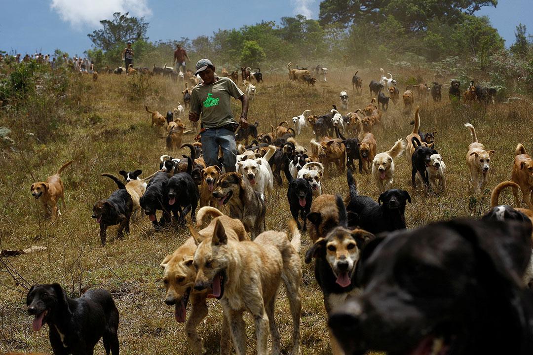 2016年4月20日,流浪狗在山嶺上奔跑。在哥斯達黎加的流浪狗收容所