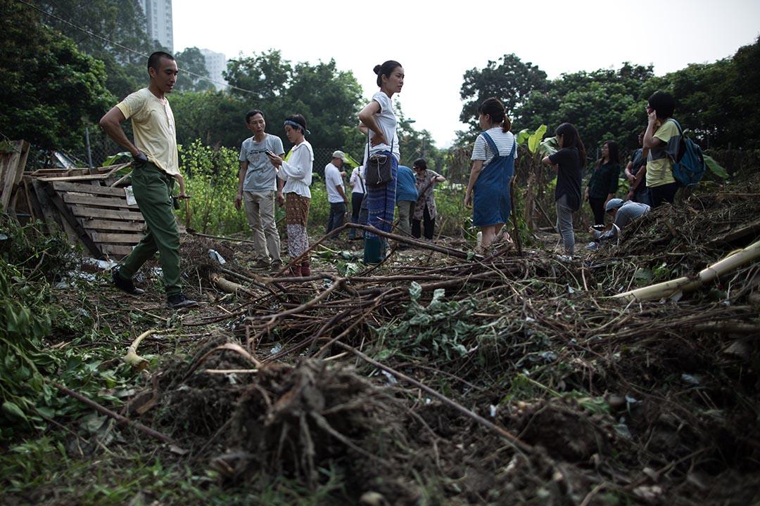 馬屎埔村一塊農地遭挖土機破壞後,村民及聲援人士在農地上重新平整農地。