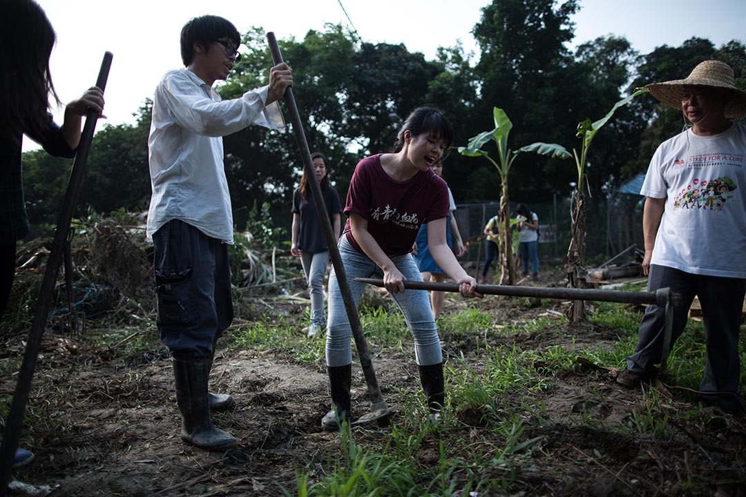 馬屎埔村一塊農地遭挖土機破壞後,村民及聲援人士將附近的蕉樹移植到農地上。