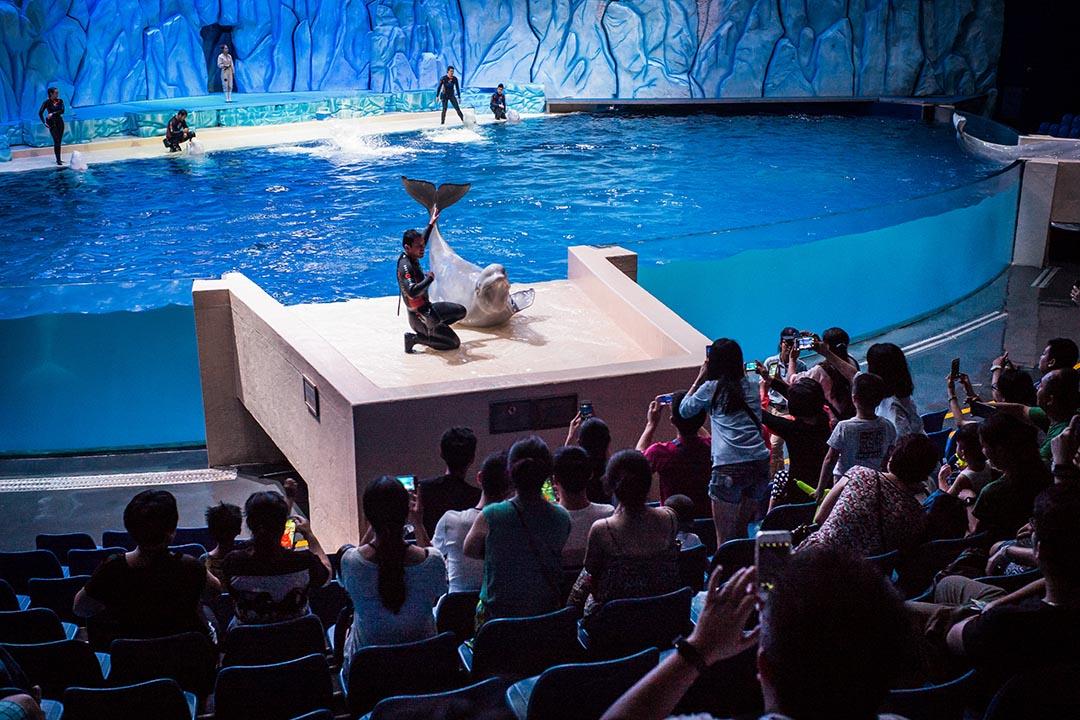 長隆海洋王國交叉組合了水族館、動物劇場和奇幻特效,把主題公園的感官體驗推到極致。
