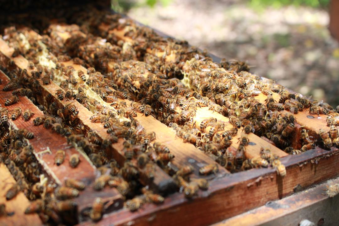 蜜蜂有將蜂蜜往上存放的習性,蜂王產卵繁殖在下層,有多的蜜就會往上層搬。