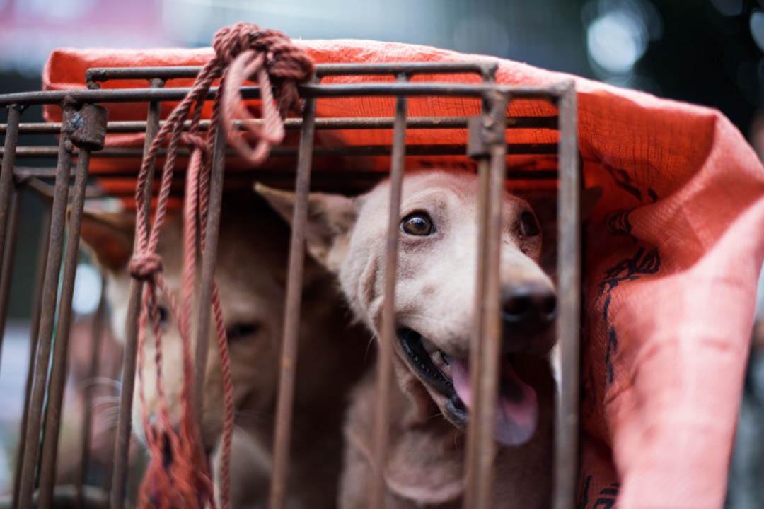 圖為玉林在市場上被販賣的狗。