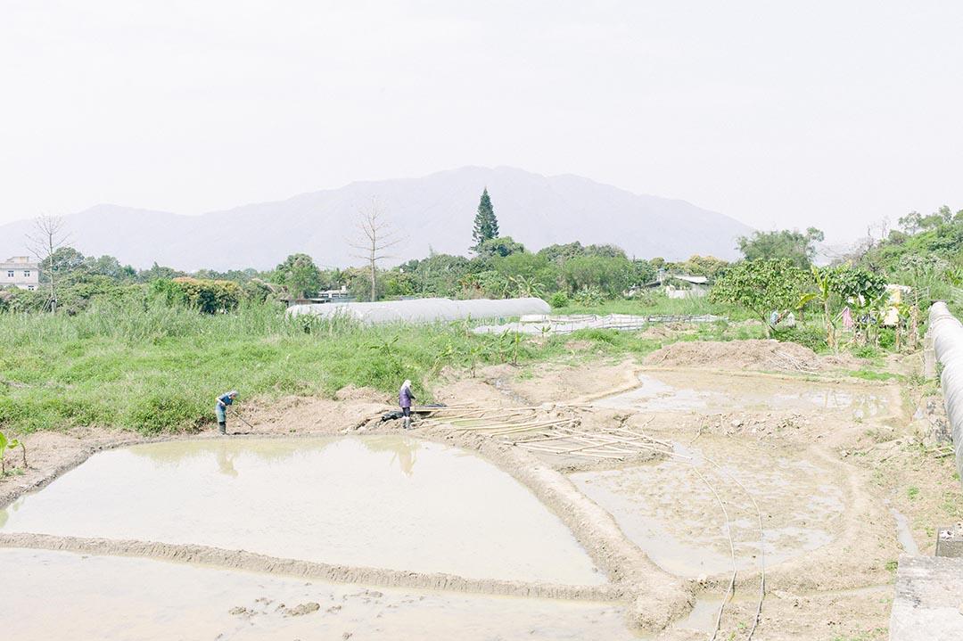 村民在打理菜園新村的「先鋒田」。