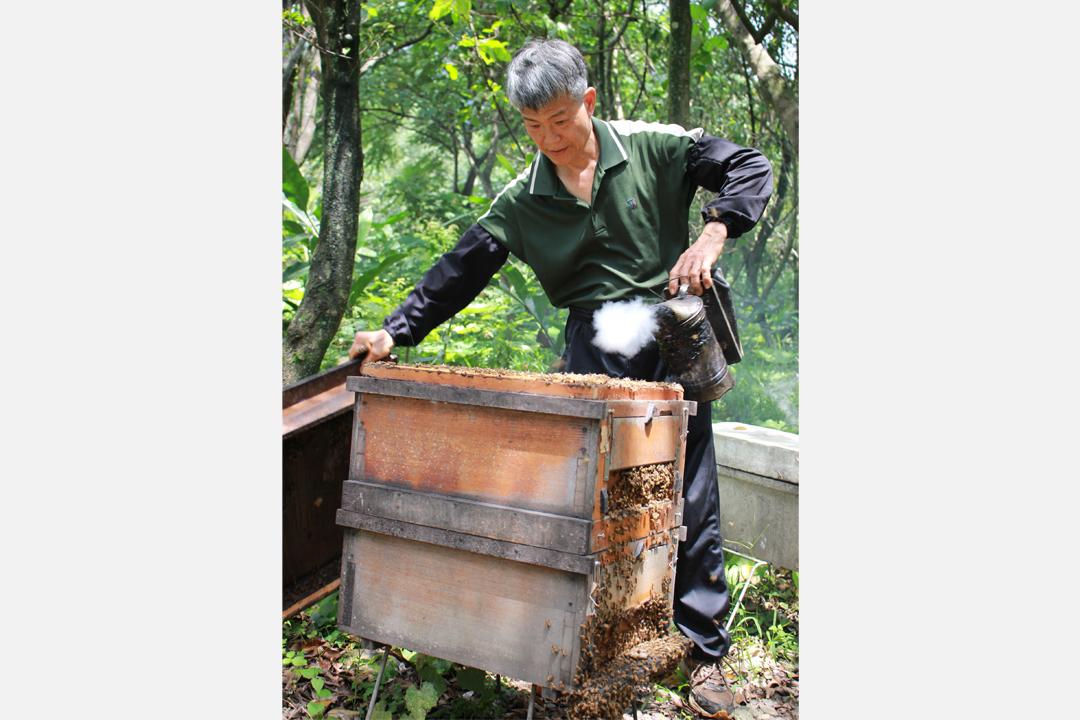 花蓮蜂之鄉的養蜂達人李福旭先生與蜂場的繼箱。