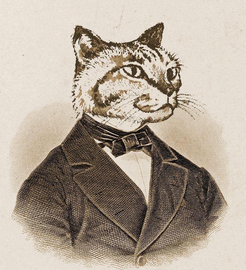 在facebook上,陳潔晧把頭像換上了貓紳士。