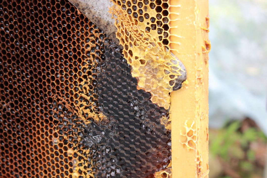以蜂蠟密封在巢房內的蜂蜜是所謂的封蓋蜜,又被稱為完熟蜜或自然熟成蜜,其風味、營養、酵素活性都顯著優於一般蜜。