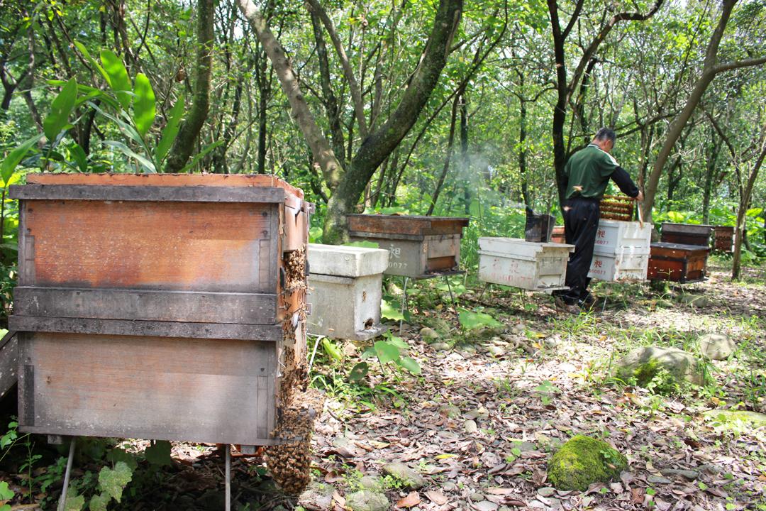 繼箱的採收只採上層的蜜,下層留給蜜蜂吃,較符合蜜蜂的習性。