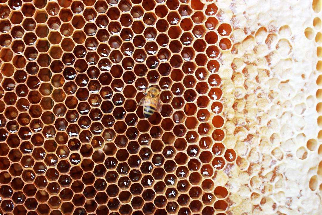蜂蜜不只是植物的精華、生物酵素的活性,它更承載着風土,封存着時光。