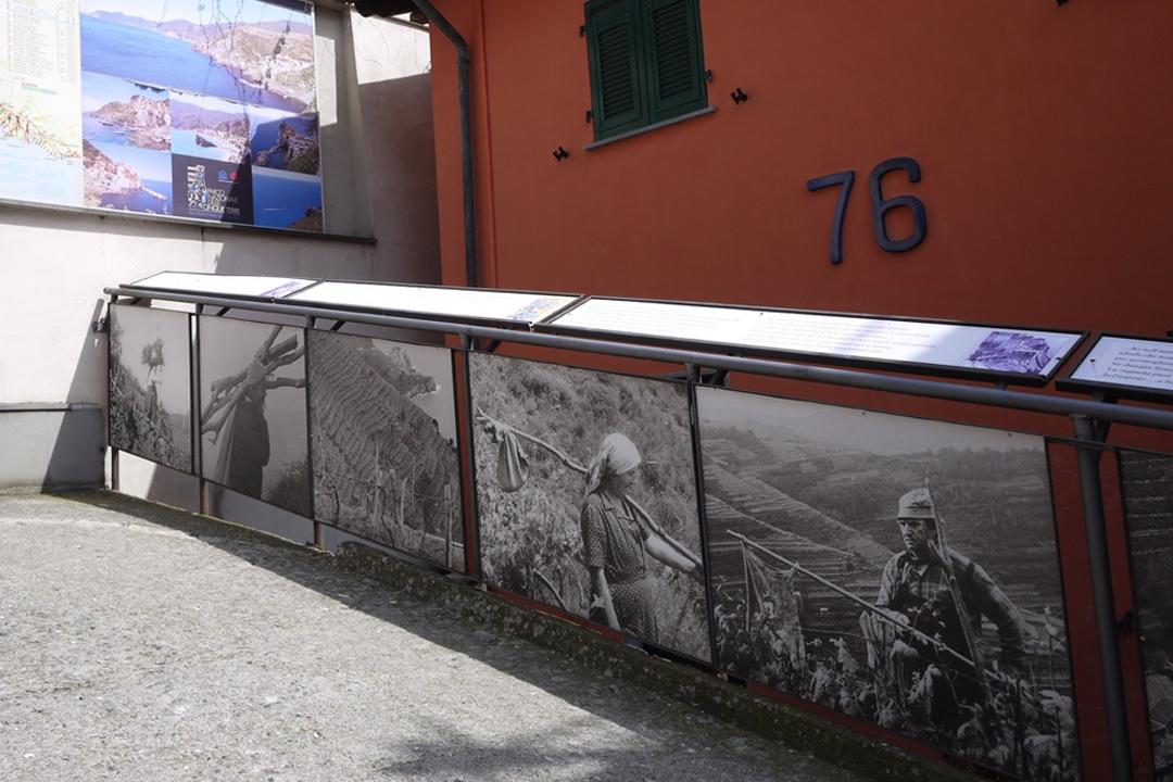 舊時照片可見村民鑿壁爭地,在原無可能耕作的岩壁上,闢出方寸之地。