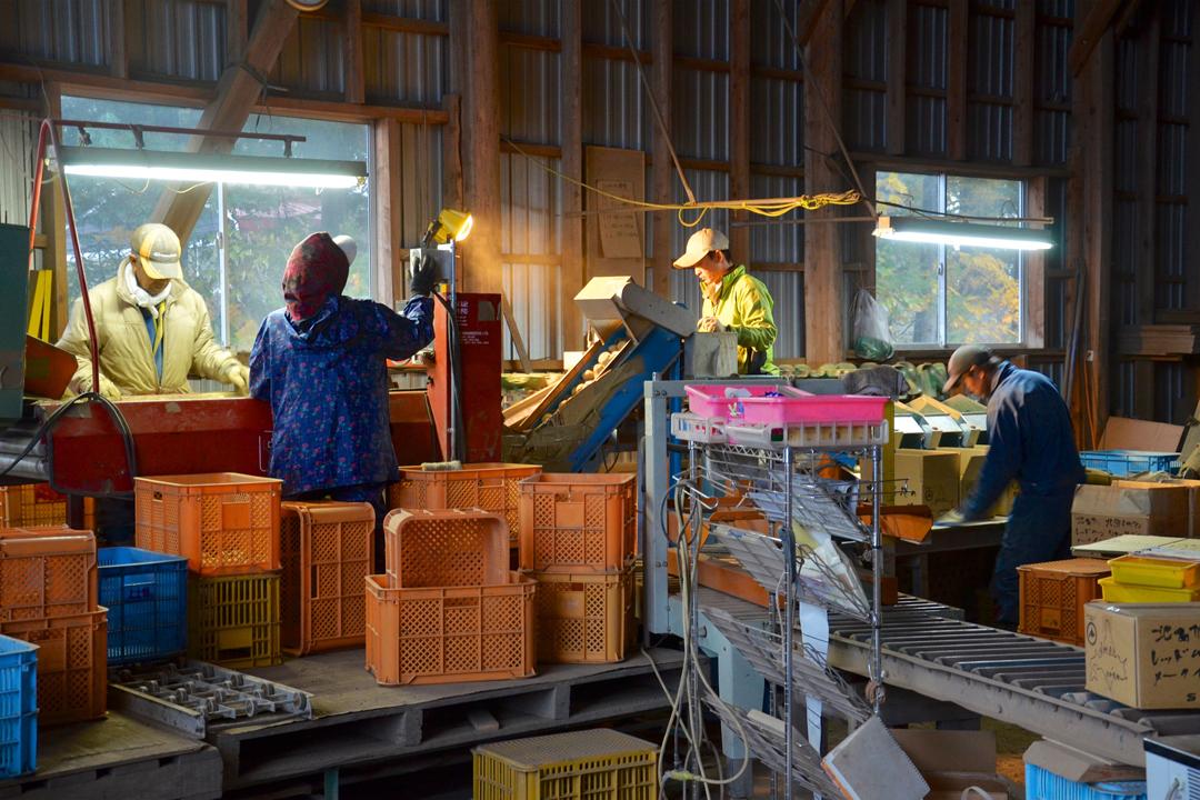 當其它農家秋收後開始休息,村上農場除了儲藏熟成作業,還要應付狀況頻仍的訂單與出貨。