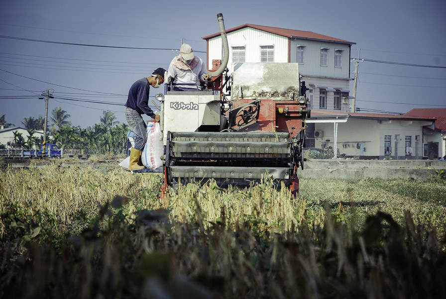 使用紅豆收割機採收紅豆。